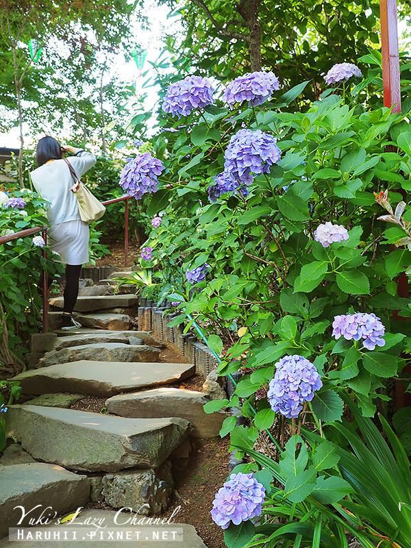 白山神社繡球花18.jpg