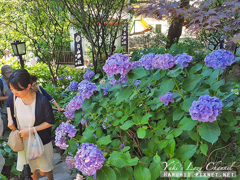 白山神社繡球花24.jpg