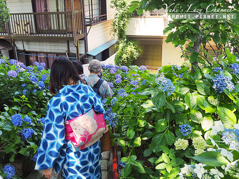 白山神社繡球花25.jpg