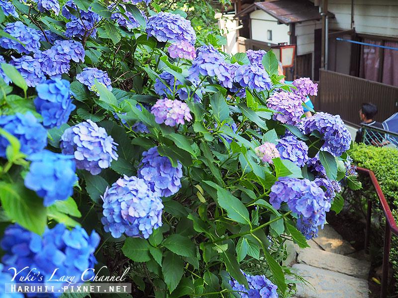 白山神社繡球花27.jpg