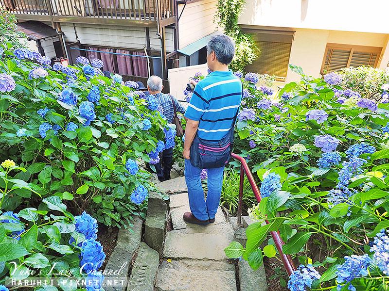 白山神社繡球花28.jpg