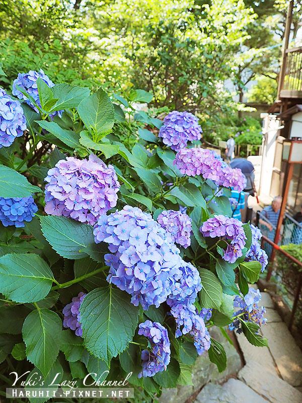 白山神社繡球花29.jpg