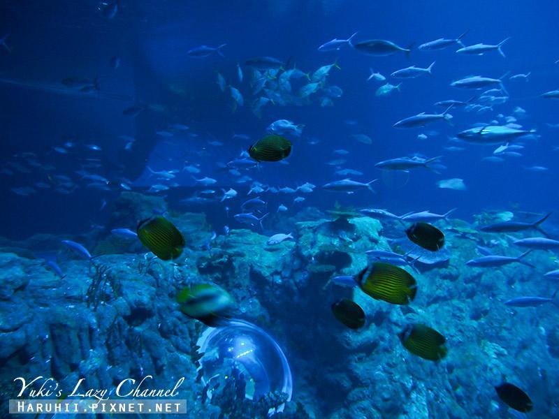 香港海洋公園91.jpg