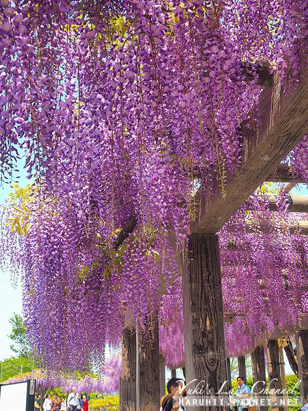 京都紫藤鳥羽水環境保全中心8.jpg
