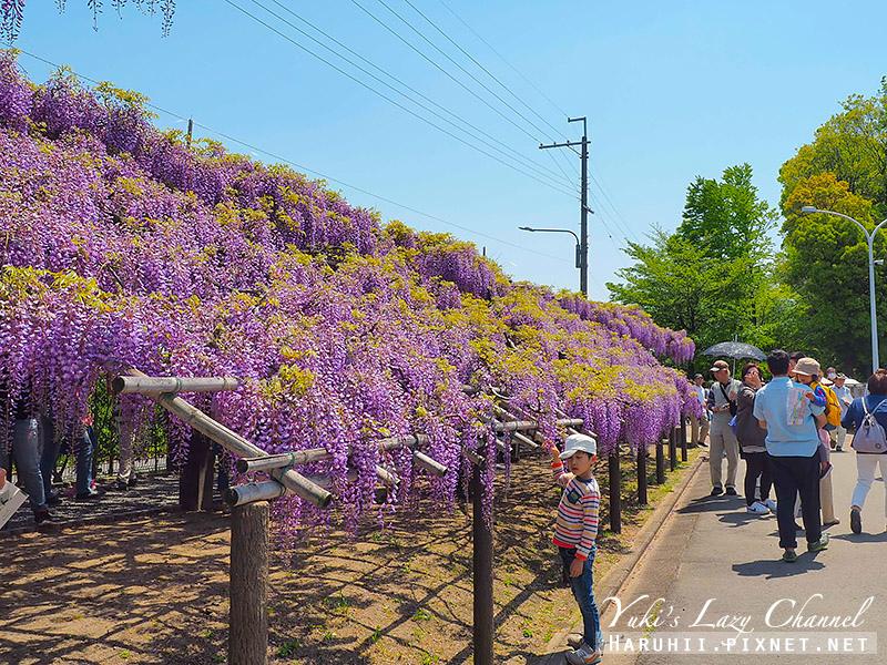京都紫藤鳥羽水環境保全中心11.jpg