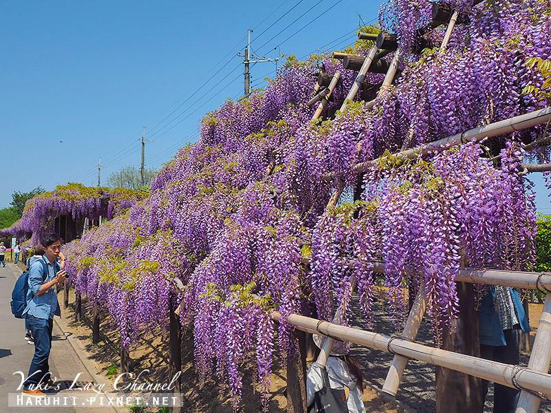 京都紫藤鳥羽水環境保全中心12.jpg