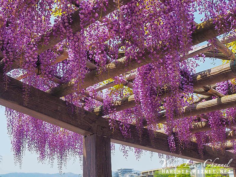 京都紫藤鳥羽水環境保全中心13.jpg