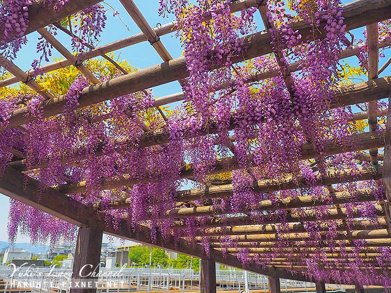京都紫藤鳥羽水環境保全中心17.jpg