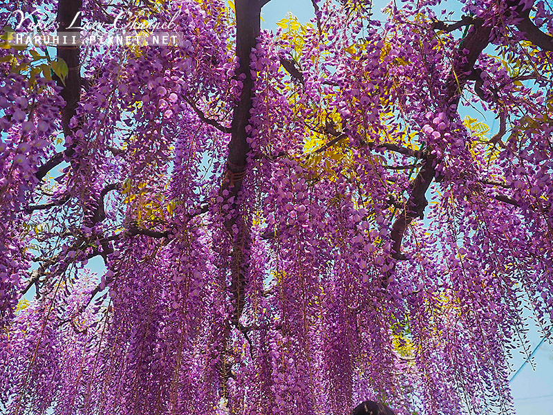 京都紫藤鳥羽水環境保全中心19.jpg