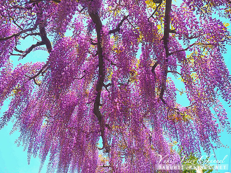 京都紫藤鳥羽水環境保全中心20.jpg