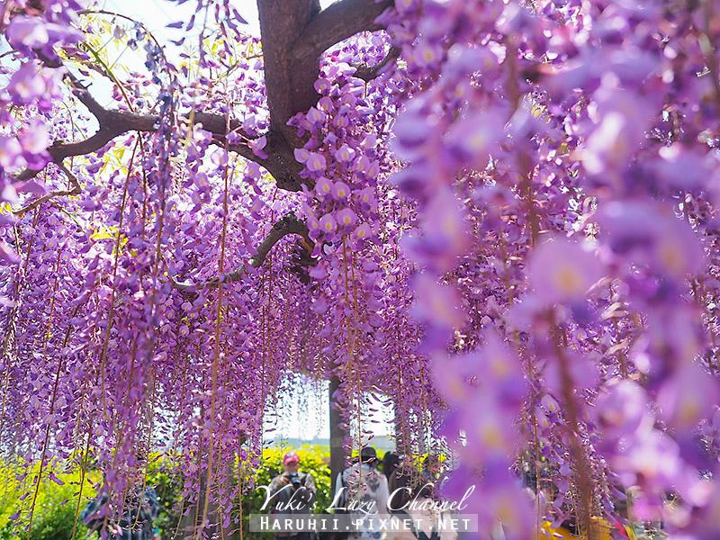 京都紫藤鳥羽水環境保全中心21.jpg