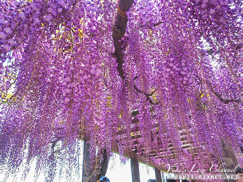 京都紫藤鳥羽水環境保全中心23.jpg