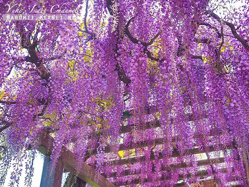 京都紫藤鳥羽水環境保全中心24.jpg