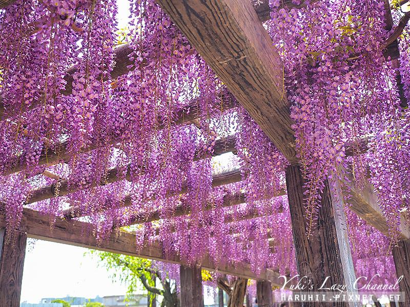 京都紫藤鳥羽水環境保全中心28.jpg