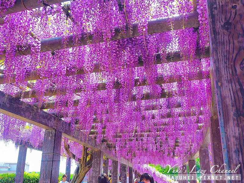 京都紫藤鳥羽水環境保全中心30.jpg