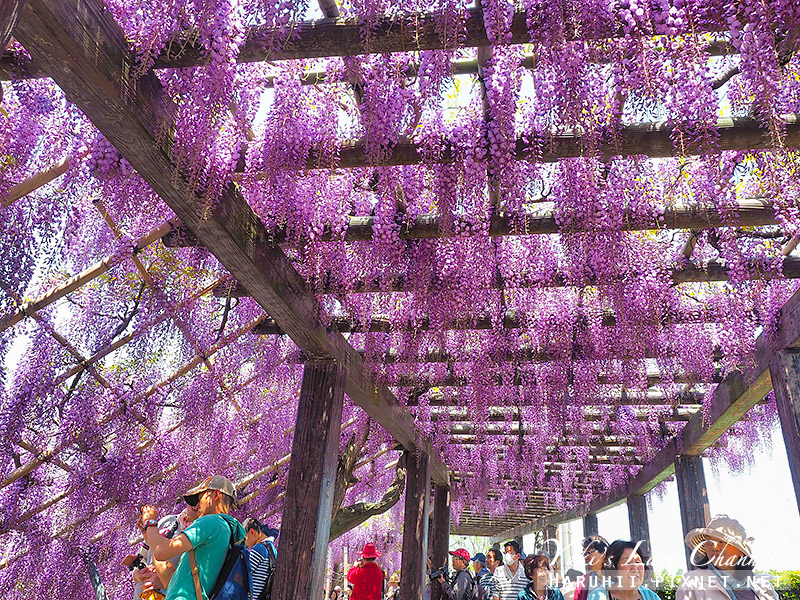 京都紫藤鳥羽水環境保全中心31.jpg