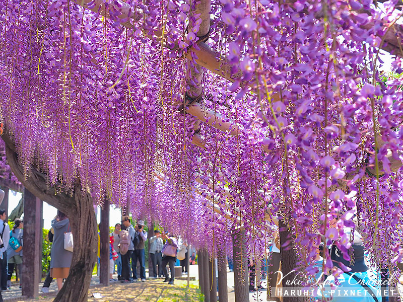 京都紫藤鳥羽水環境保全中心32.jpg