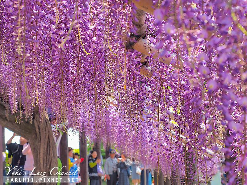 京都紫藤鳥羽水環境保全中心33.jpg