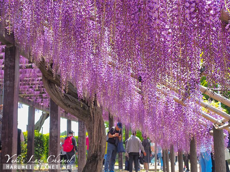 京都紫藤鳥羽水環境保全中心34.jpg