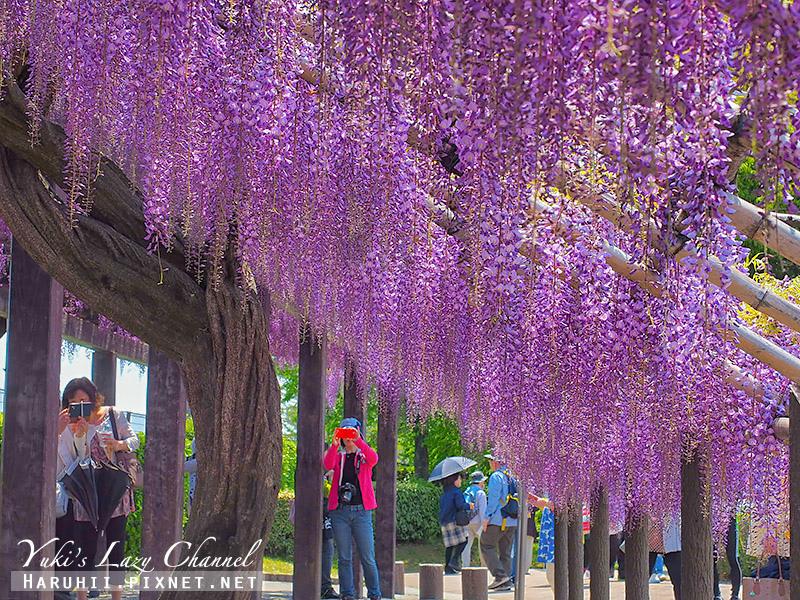 京都紫藤鳥羽水環境保全中心35.jpg