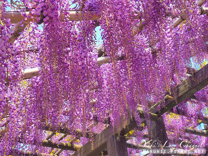 京都紫藤鳥羽水環境保全中心36.jpg