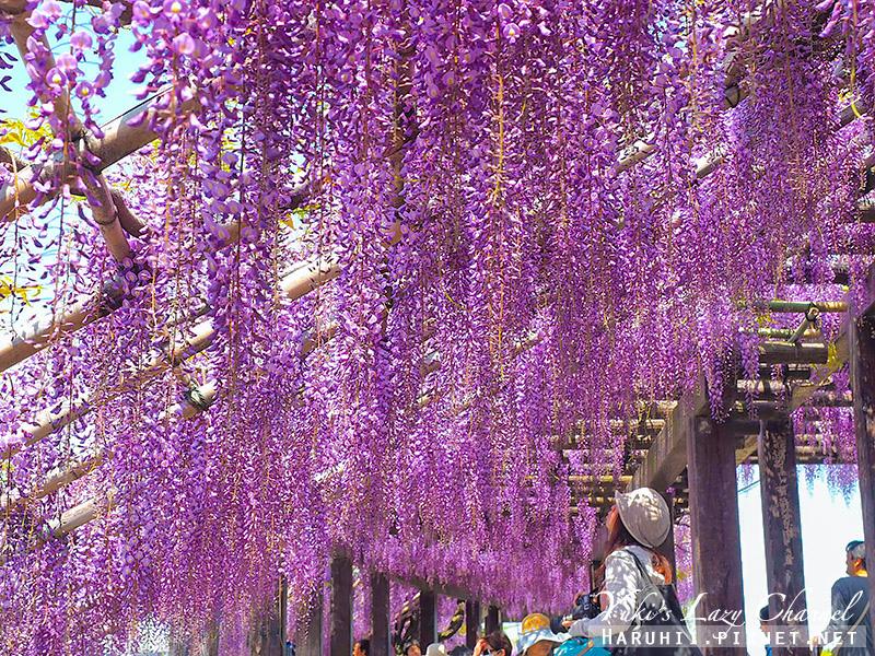 京都紫藤鳥羽水環境保全中心38.jpg