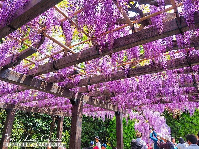 京都紫藤鳥羽水環境保全中心39.jpg