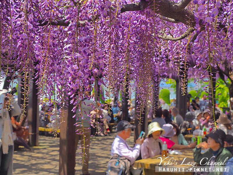 京都紫藤鳥羽水環境保全中心43.jpg