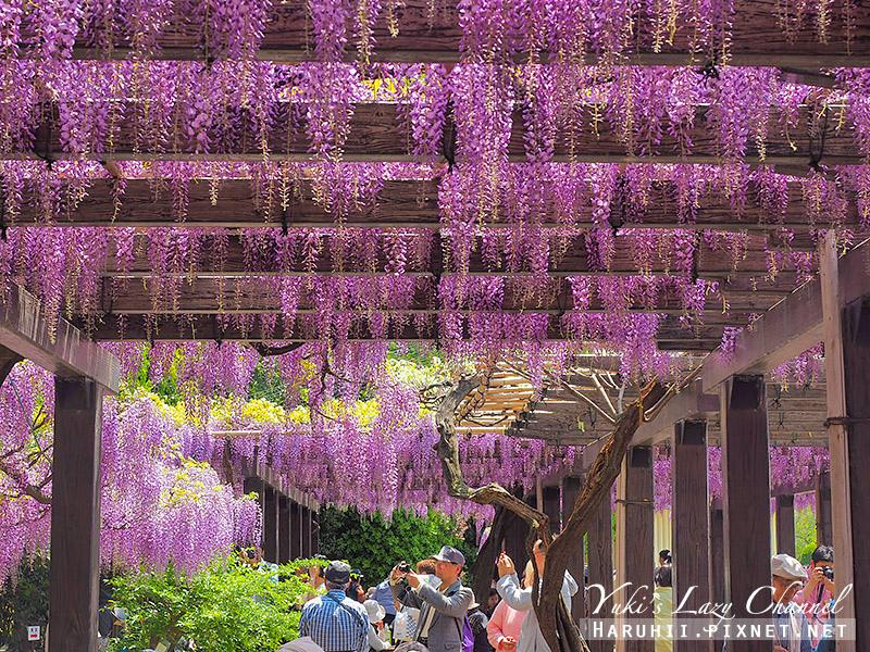 京都紫藤鳥羽水環境保全中心44.jpg