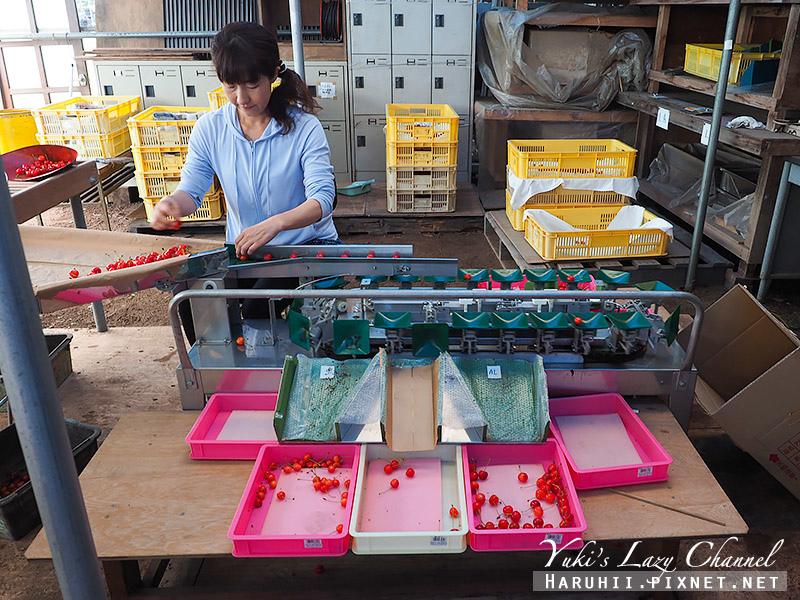 牧野觀光果園採櫻桃18.jpg