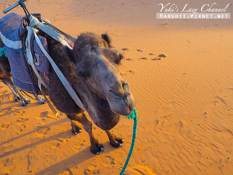 撒哈拉沙漠22.jpg
