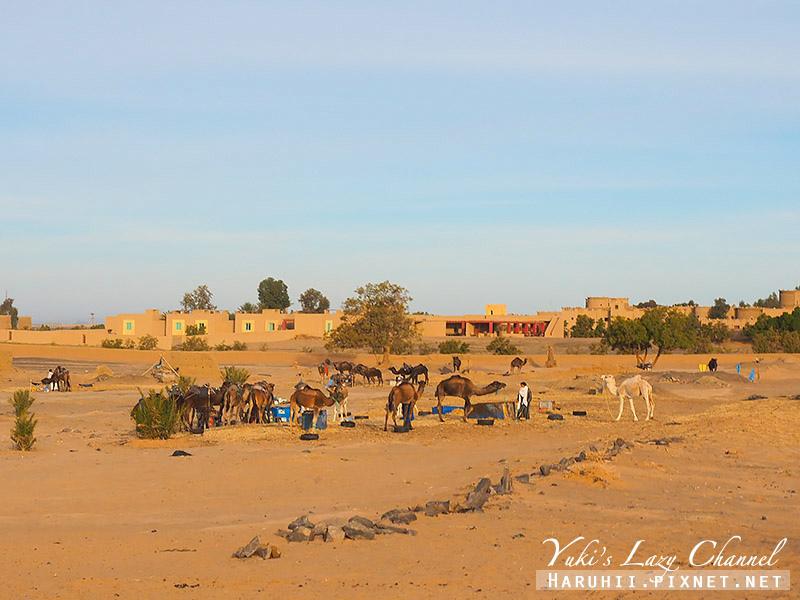 撒哈拉沙漠50.jpg