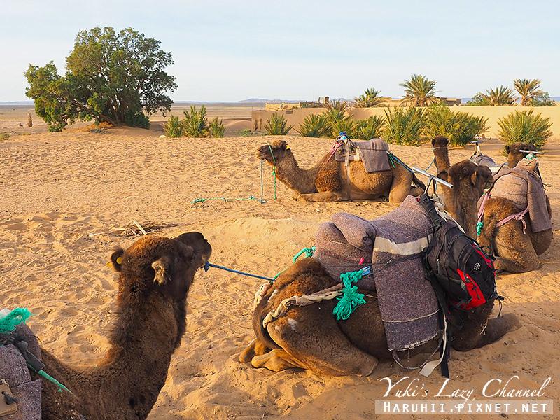 撒哈拉沙漠51.jpg