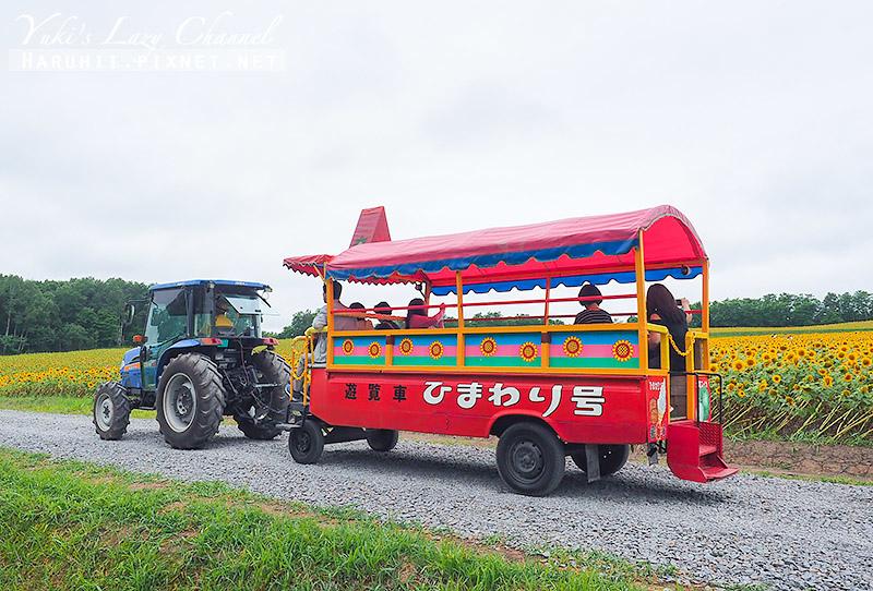 北龍町向日葵花田3.jpg