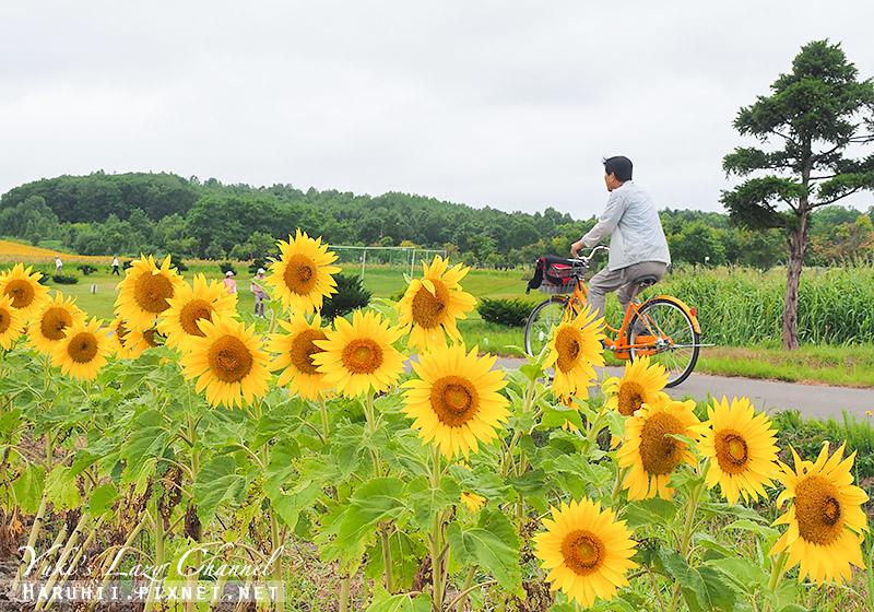 北龍町向日葵花田6.jpg