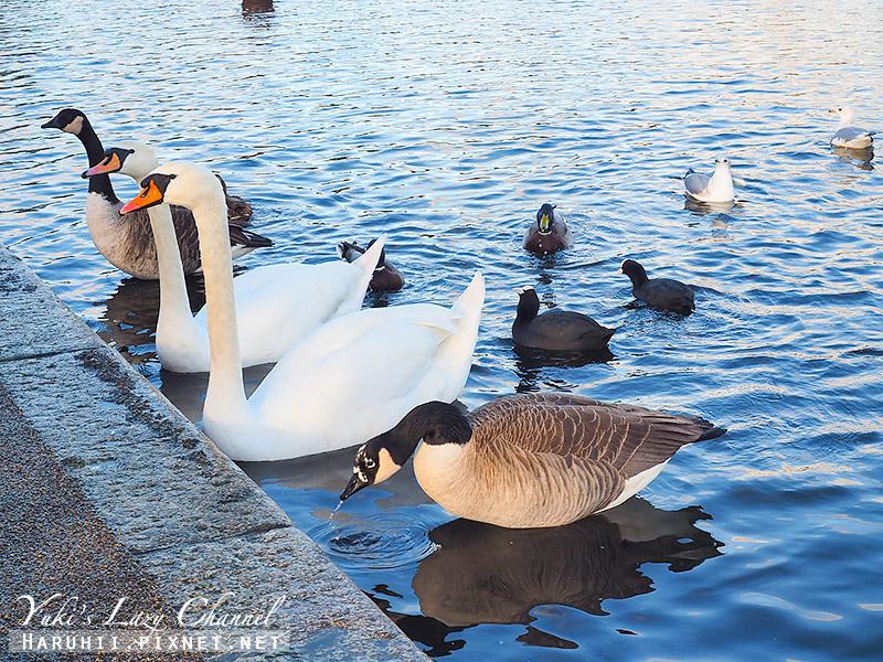 海德公園Hyde park5.jpg