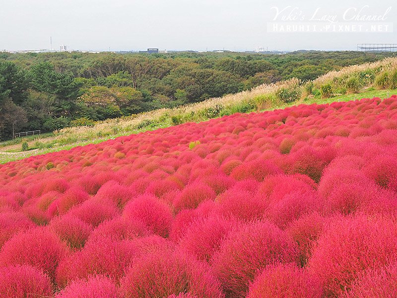 國營日立海濱公園 国営ひたち海浜公園24.jpg