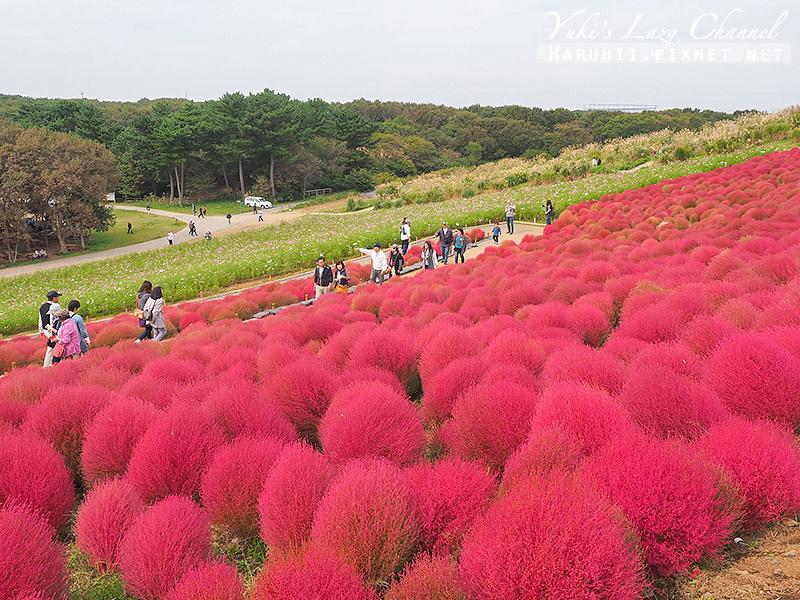 國營日立海濱公園 国営ひたち海浜公園37.jpg