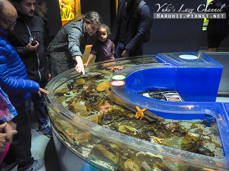 丹麥國家水族館藍色星球3.jpg