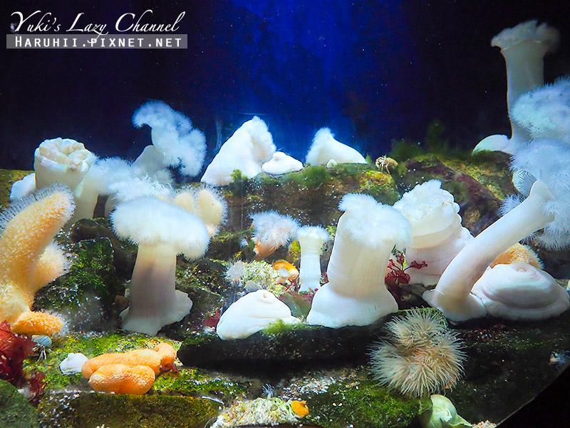 丹麥國家水族館藍色星球4.jpg