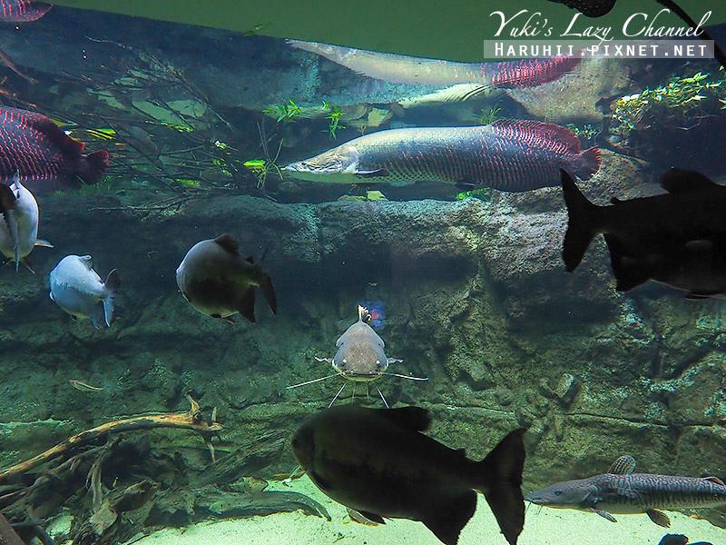 丹麥國家水族館藍色星球13.jpg