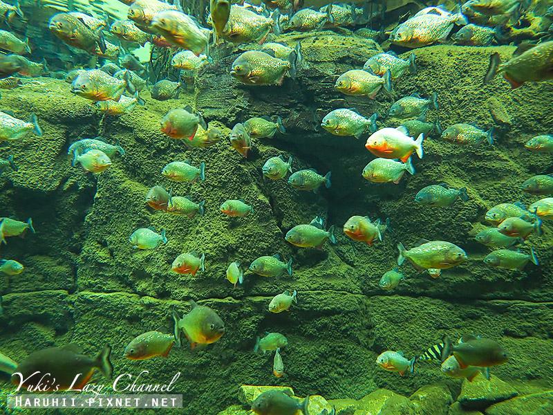 丹麥國家水族館藍色星球12.jpg