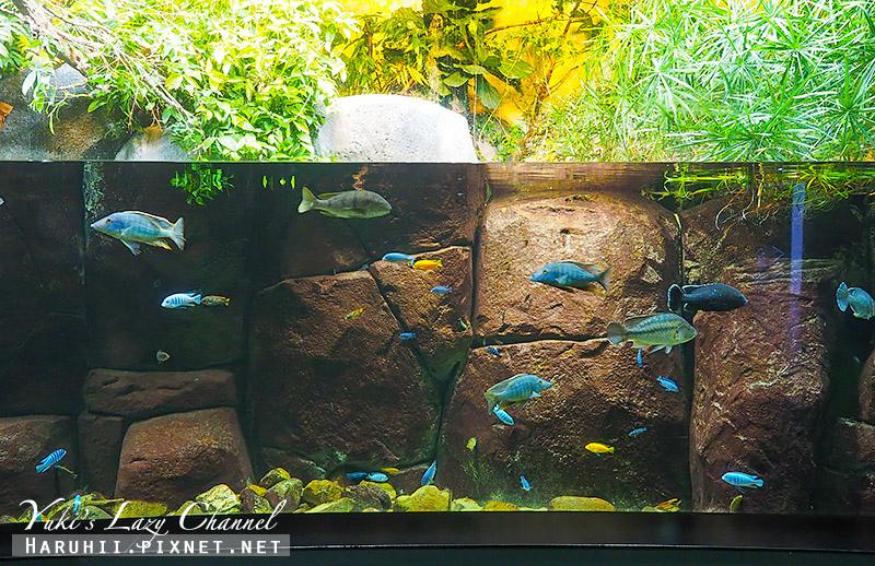 丹麥國家水族館藍色星球17.jpg