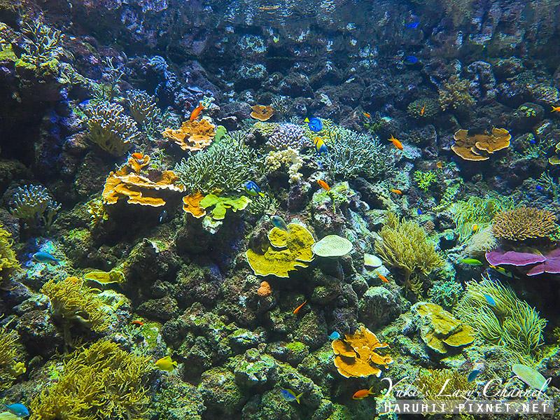丹麥國家水族館藍色星球19.jpg