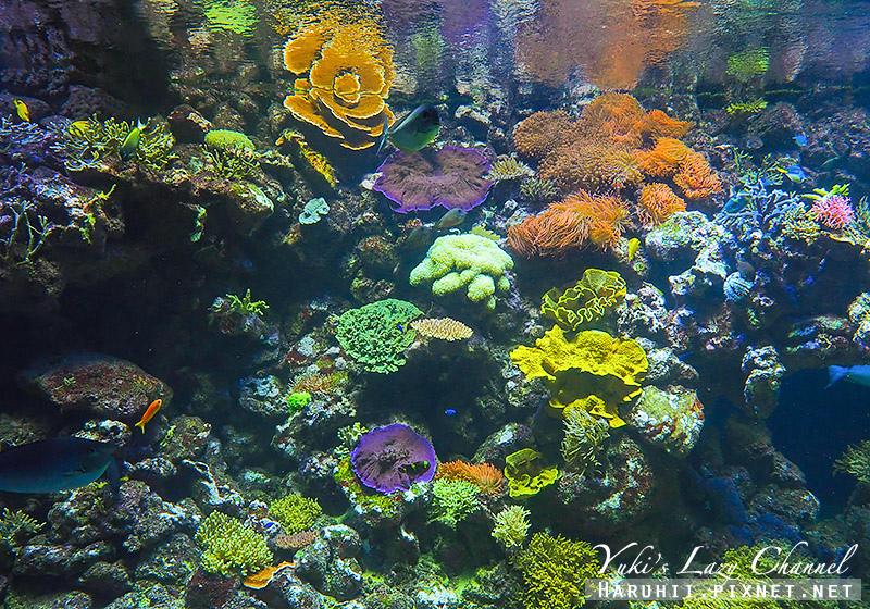 丹麥國家水族館藍色星球23.jpg