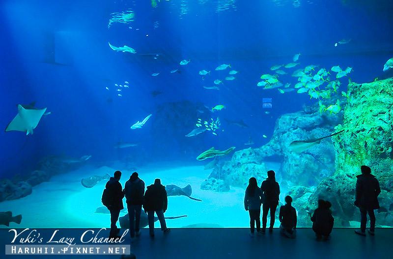 丹麥國家水族館藍色星球26.jpg