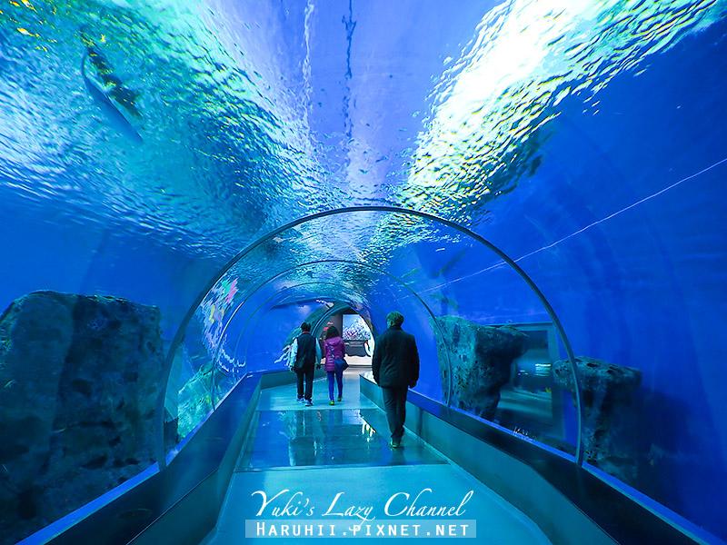 丹麥國家水族館藍色星球28.jpg
