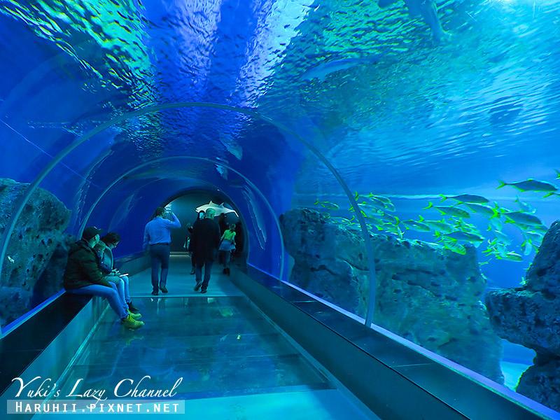 丹麥國家水族館藍色星球30.jpg