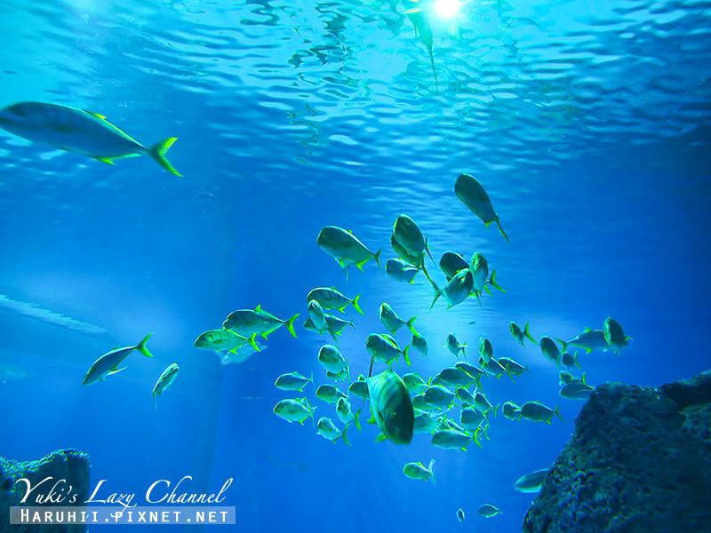 丹麥國家水族館藍色星球29.jpg
