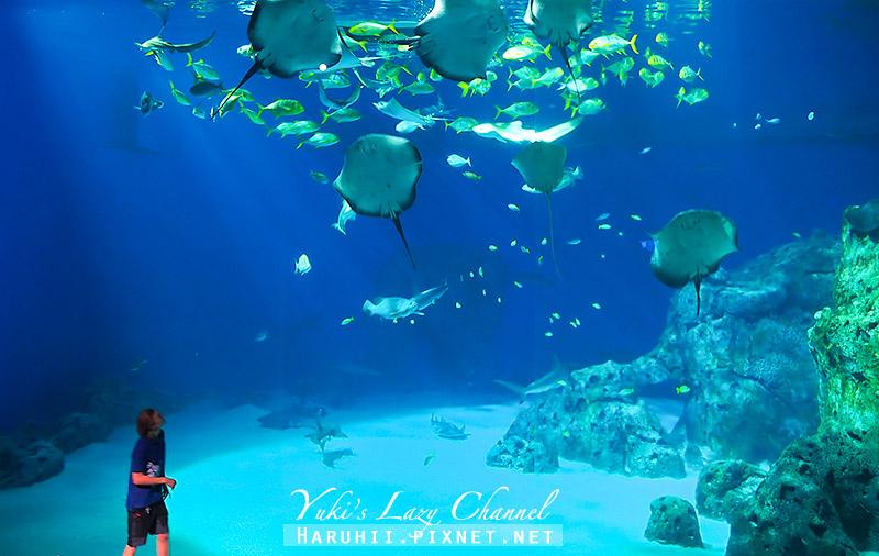 丹麥國家水族館藍色星球32.jpg
